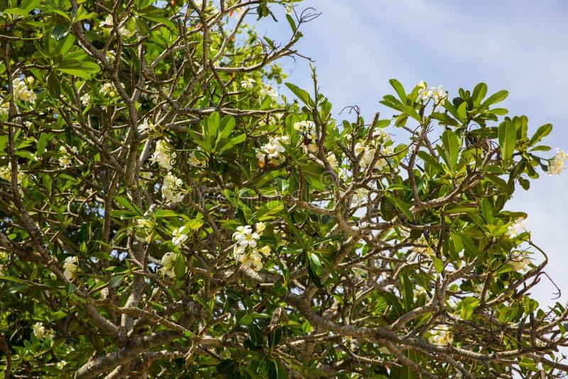 Eiland Bali Tropische Bloemen royalty-vrije stock afbeeldingen