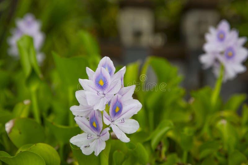 Eiland Bali Tropische Bloemen royalty-vrije stock afbeelding