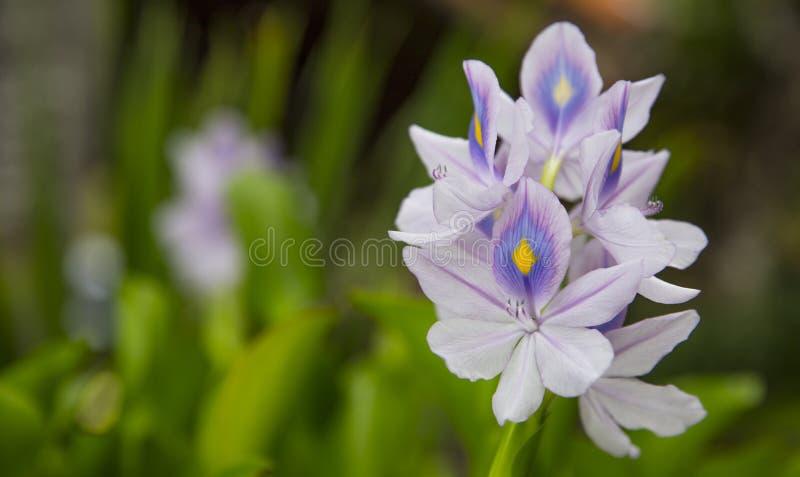Eiland Bali Tropische Bloemen royalty-vrije stock foto's
