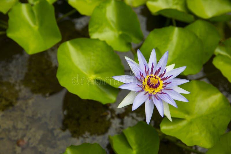 Eiland Bali Tropische Bloemen stock fotografie