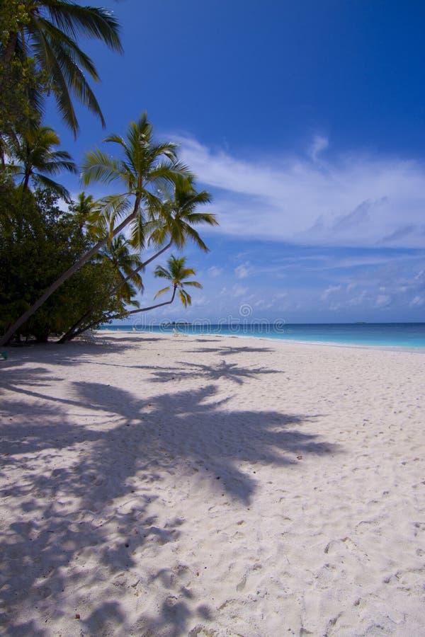 Eiland de Maldiven met mooie palmen. royalty-vrije stock afbeeldingen