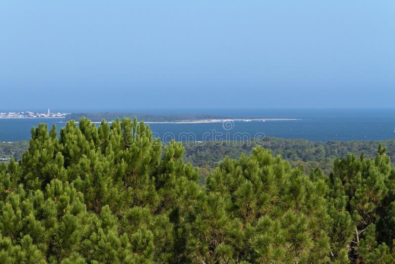 Eiland en stad achter pijnboomhout Punta del Este uruguay stock afbeeldingen
