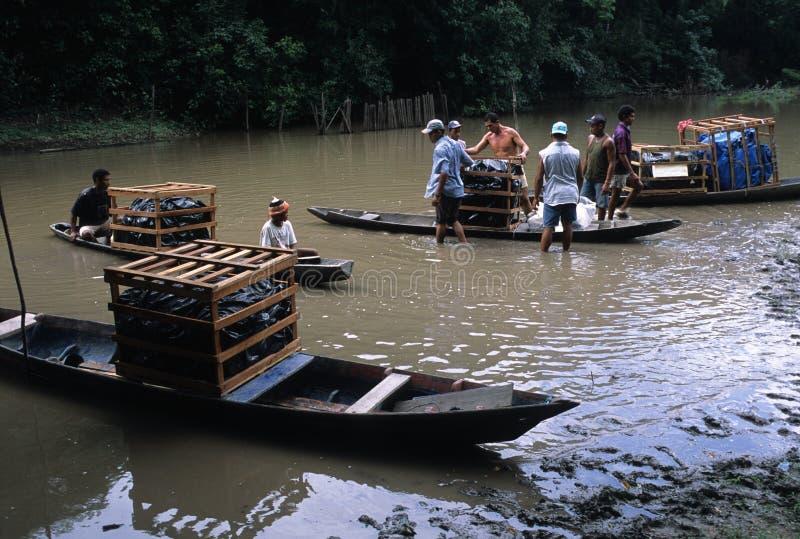 Eiland MARAJO. (Amazonië). BRAZILIË stock foto's