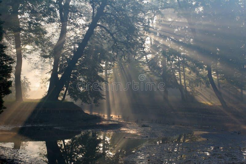 Eiland op de kleine rivier royalty-vrije stock afbeelding