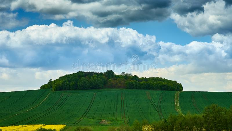 Eiland van bomen op het overzees van sappige groene gebieden stock afbeelding