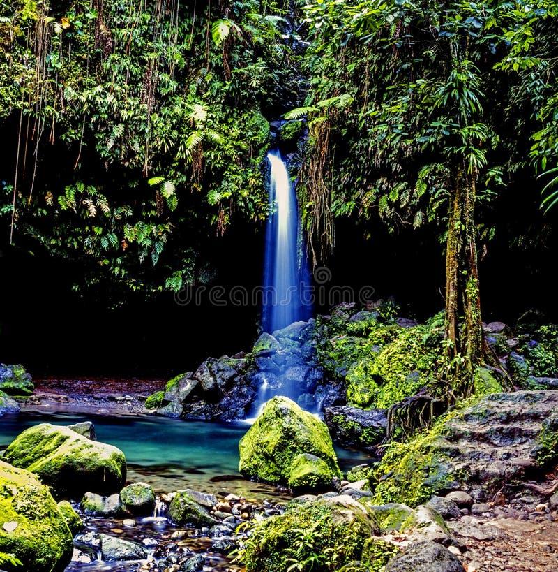 Eiland van Dominica regenwoud stock afbeeldingen
