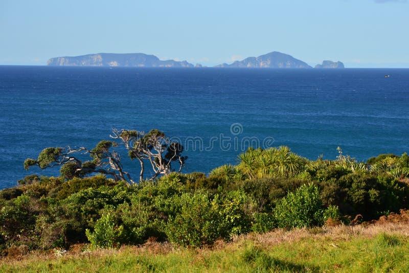 Eilanden, overzees en boskust, Nieuw Zeeland stock afbeeldingen