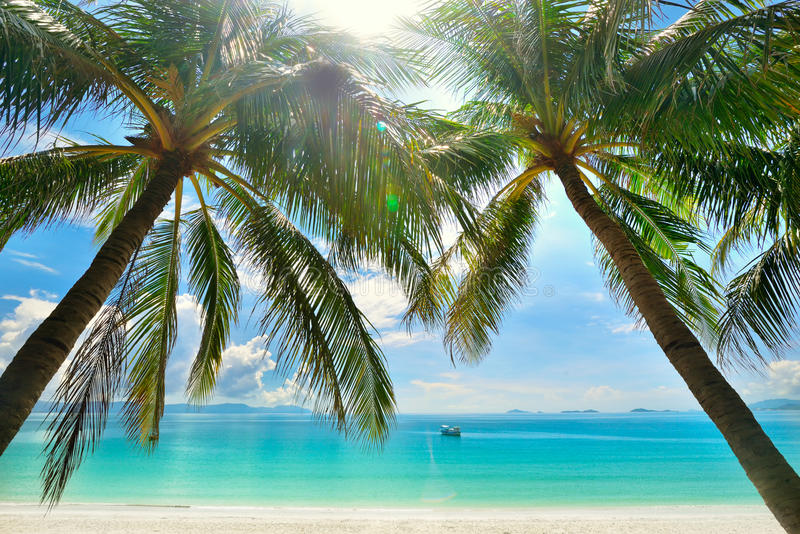 Eilandparadijs - Palmen die over een zandig wit strand hangen