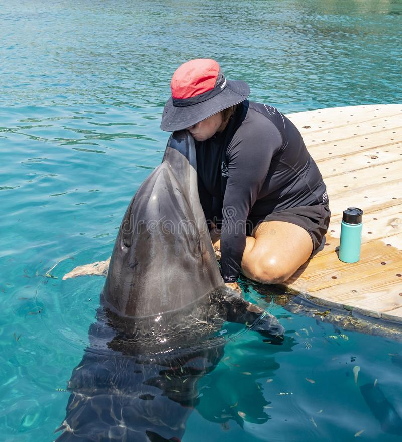 Kissing a Dolphin in Israel stock images