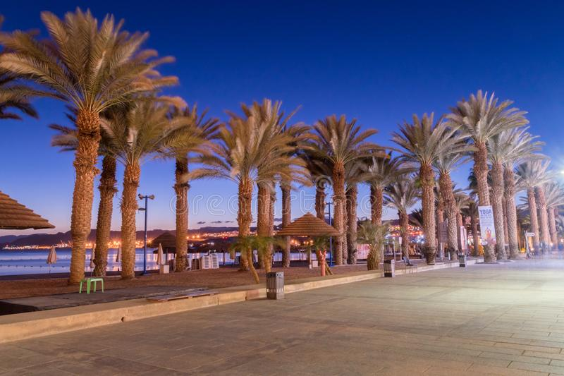 Dusk with palm trees in Eilat resort royalty free stock images