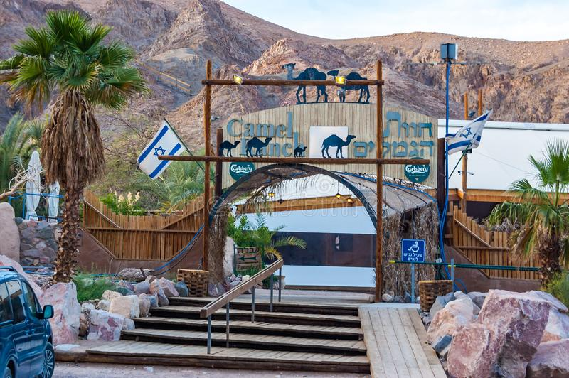 Camel ranch is very popular and interesting place in Eilat where people can make camels tours in the desert as the main attraction. Eilat, Israel - March 21 royalty free stock photography