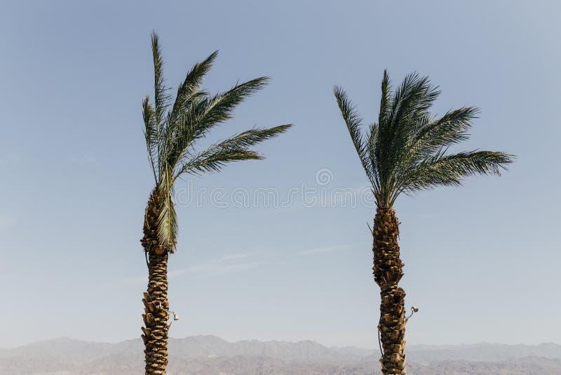 Eilat Izrael krajobrazy & urlopowy miejsce przeznaczenia zdjęcie stock