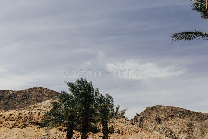 Eilat Izrael krajobrazy & urlopowy miejsce przeznaczenia zdjęcia stock