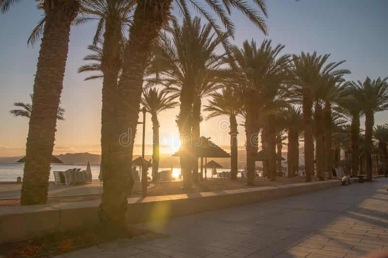 Eilat sunset with palm trees.  stock image