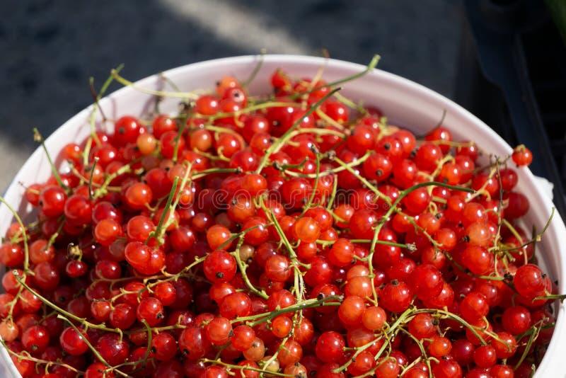 Eimer und Glas mit rote Johannisbeerbeeren und rote Johannisbeerstaugelee auf einem Gartentisch stockbilder