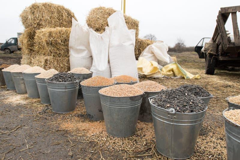 Eimer und Taschen des Kornes, Ballen Heu und Stroh Dorfmarkt von Landwirten Gerste, Mais, Weizen, Roggen, Samen, Kuchen, Hirse, s stockfotografie