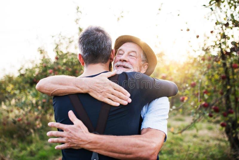 Ein älterer Mann und erwachsene eine Sohnstellung im Apfelgarten im Herbst, umarmend stockbilder