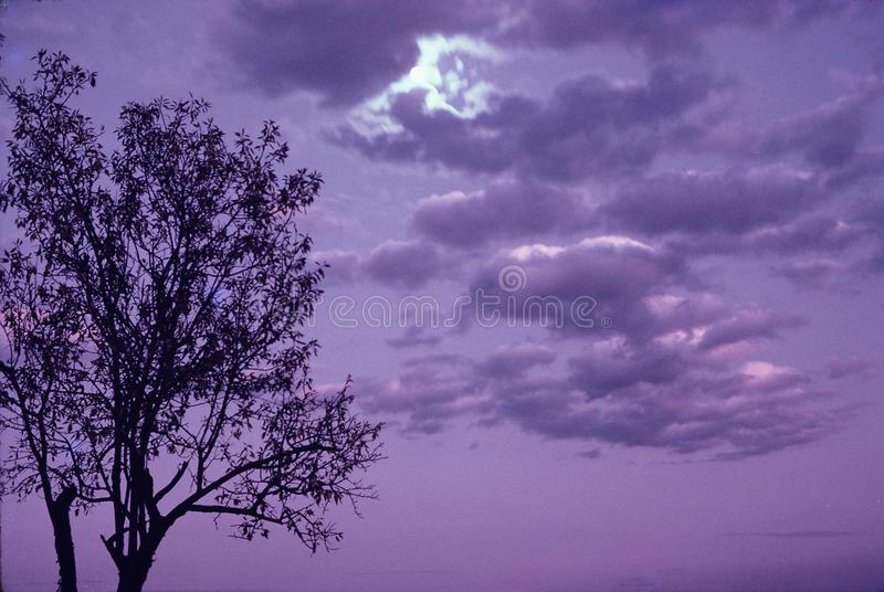 Ein Abend in Srinagar, Indien lizenzfreies stockbild