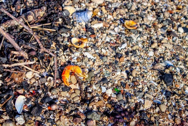 Ein Abschluss herauf Fotografie eines Strandes mit dem princer der Krabbe stockbilder