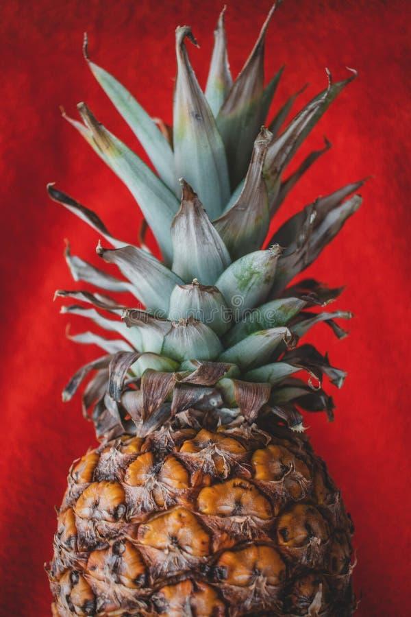 Ein Abschluss oben einer Ananas in einem roten Hintergrund stockbilder