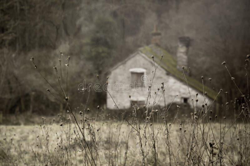Ein Abschluss oben von toten Anlagen im Winter mit einem ruinierten Altbau verwischt im Hintergrund Wenn gedämpft ist, redigieren stockbild