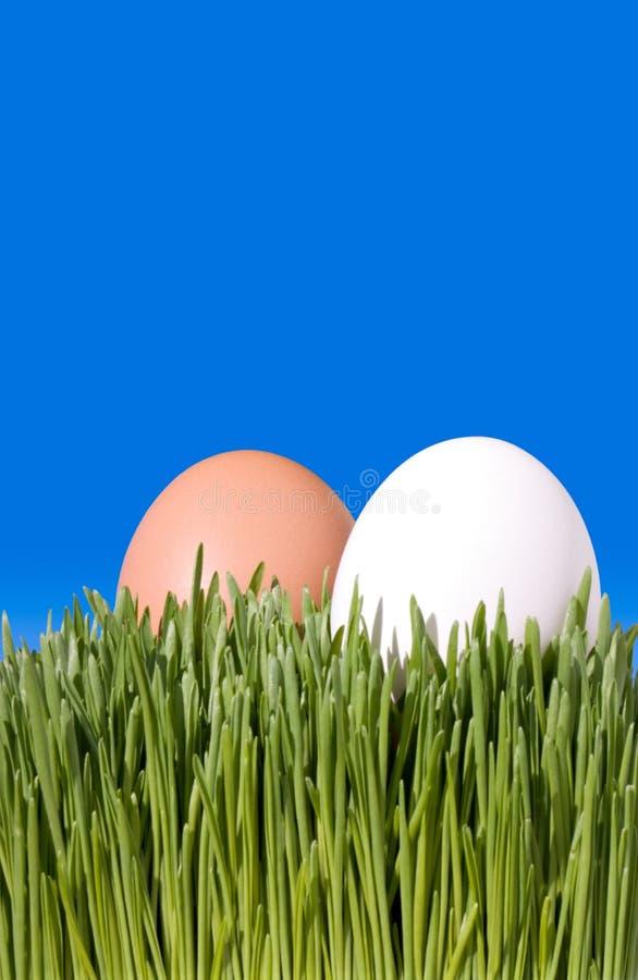 Ein Abschluss oben von zwei Brown und weiße Eier, Nestled im grünen Gra lizenzfreie stockbilder