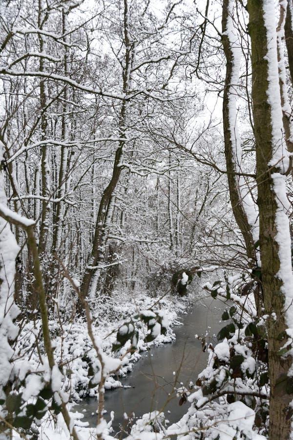 Ein Abzugsgraben im Wald im Winter stockfotos