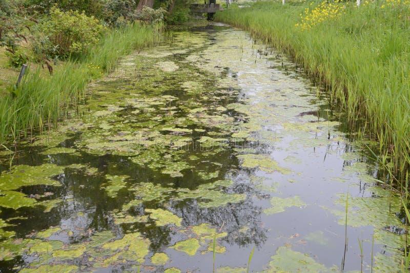 Ein Abzugsgraben mit Waterplants lizenzfreies stockbild