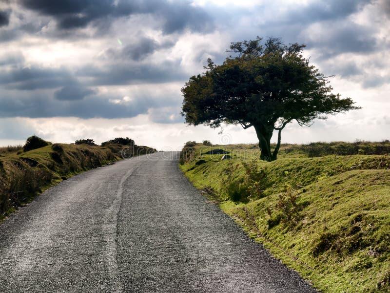 Ein alleiner Baum auf einer trostlosen Landstraße lizenzfreie stockbilder