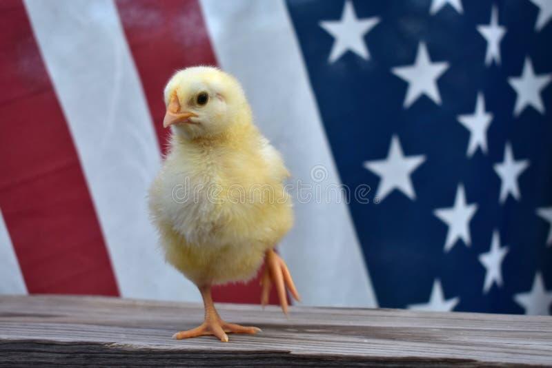 Ein alles amerikanisches Küken mit Flagge stockbild