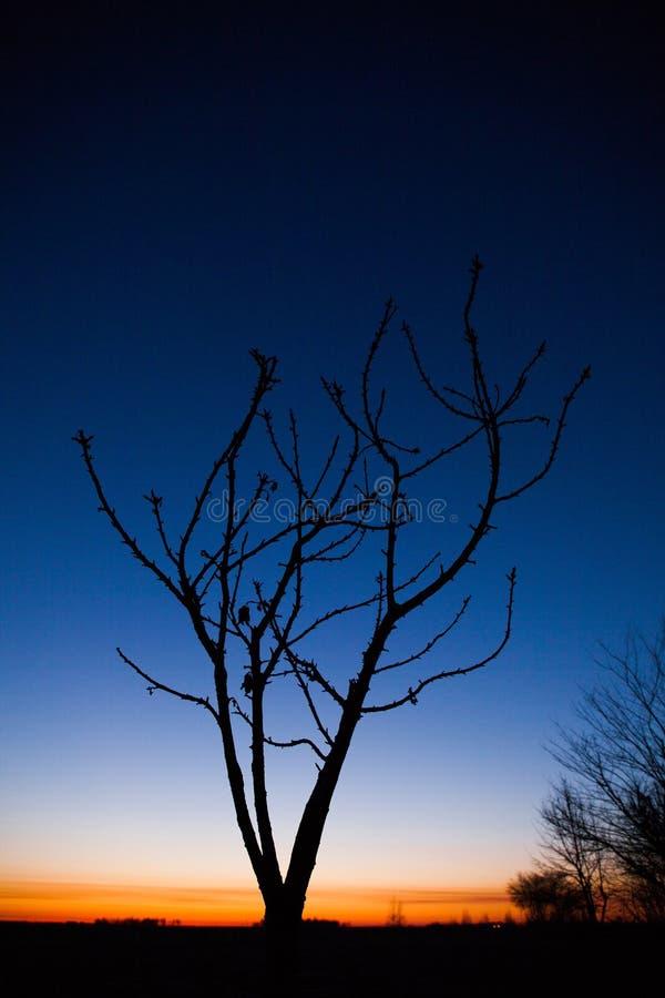 Ein alter Bauernhof, ein trockener Baum D?mmerung au?erhalb der Stadt lizenzfreie stockbilder