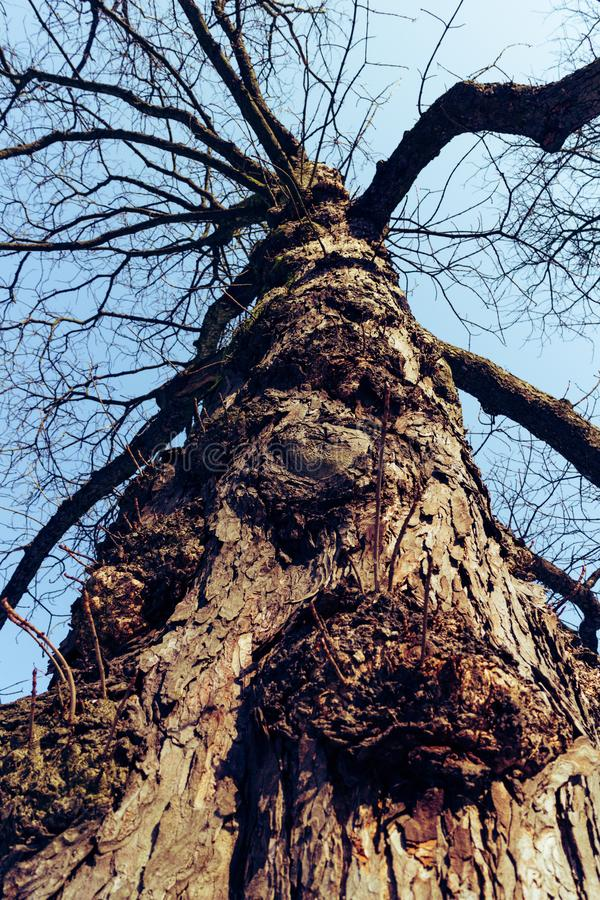 Ein alter gruseliger Baum ohne Blätter lizenzfreies stockbild