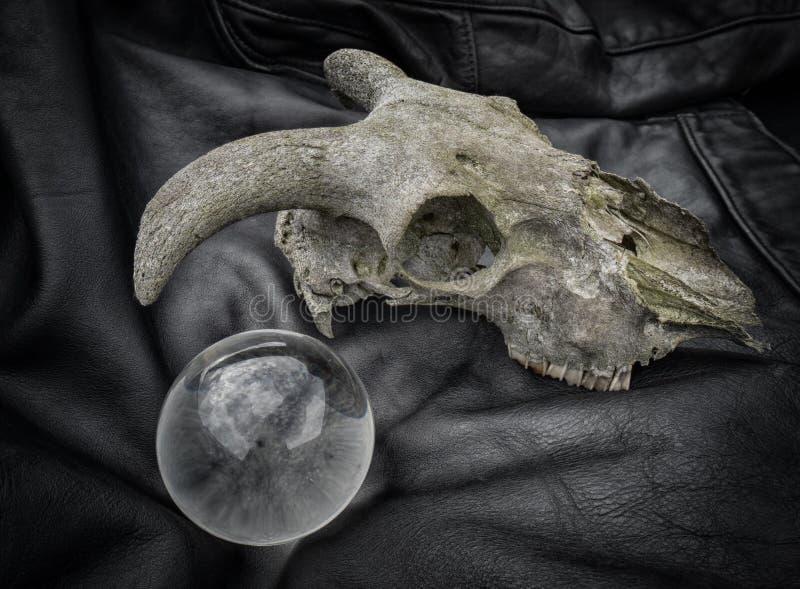 Ein alter Schafschädel, der auf einer Lederjacke mit einer Glaskugel stillsteht stockbild