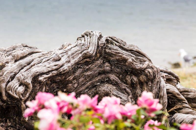 Ein altes Baumkabel stockfoto