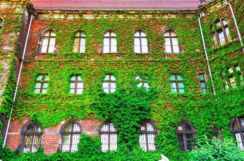 Ein altes Fenster mit einem Gitter, ein Altbau überwältigt mit Wachstum, grüne Wände, Efeuübliche schöner Hintergrund von livin lizenzfreies stockbild