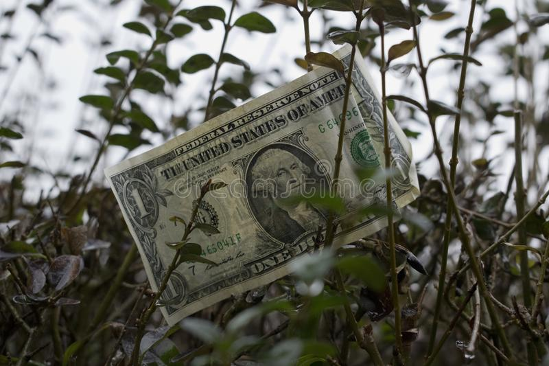 Ein amerikanischer Dollar auf dem Baum lizenzfreie stockfotos
