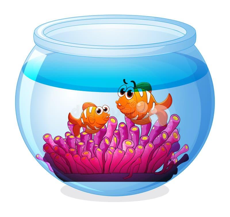 Ein Aquarium mit zwei orange Fischen stock abbildung