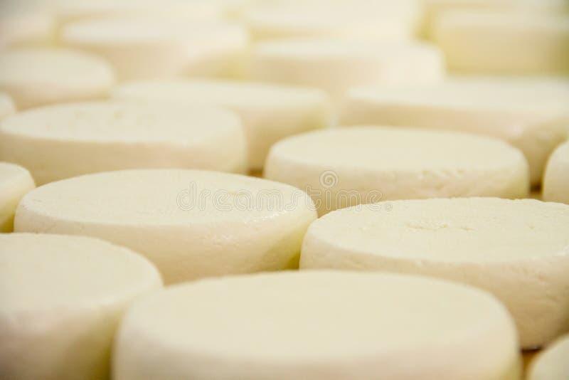Ein Arbeitskraft gesetztes Käsejunges im Plastik stockfotos