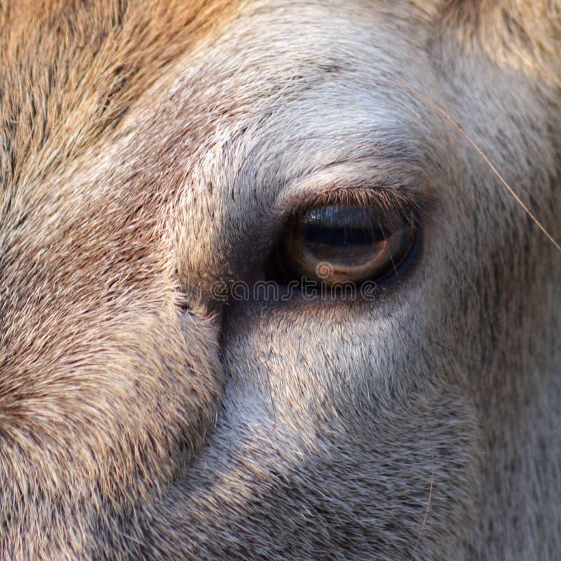 Ein Auge pferdeartig lizenzfreies stockfoto