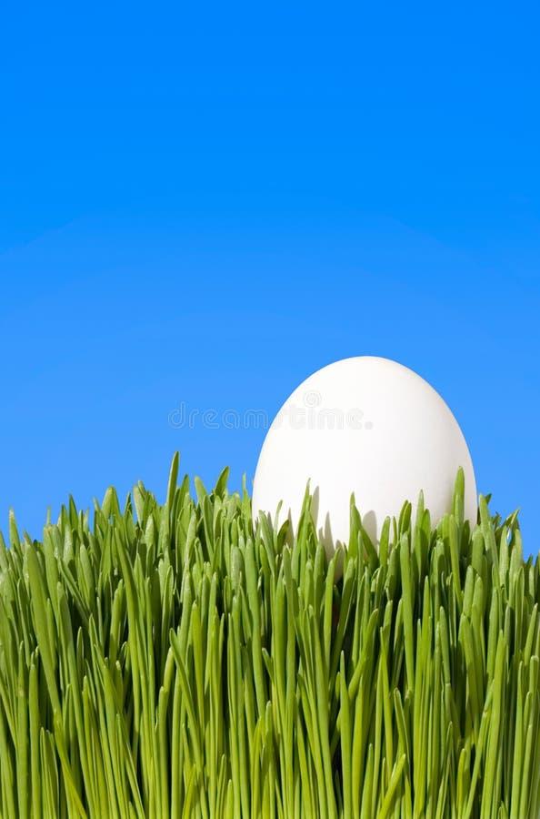 Ein ausführlicher Abschluss oben eines weißen Eies, Nestled im grünen Gras w lizenzfreies stockfoto