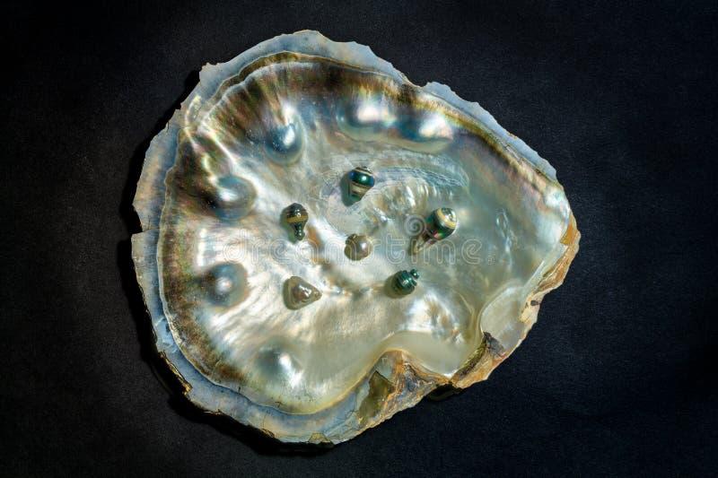 Ein Austernoberteil mit schwarzen Perlen stockfotografie