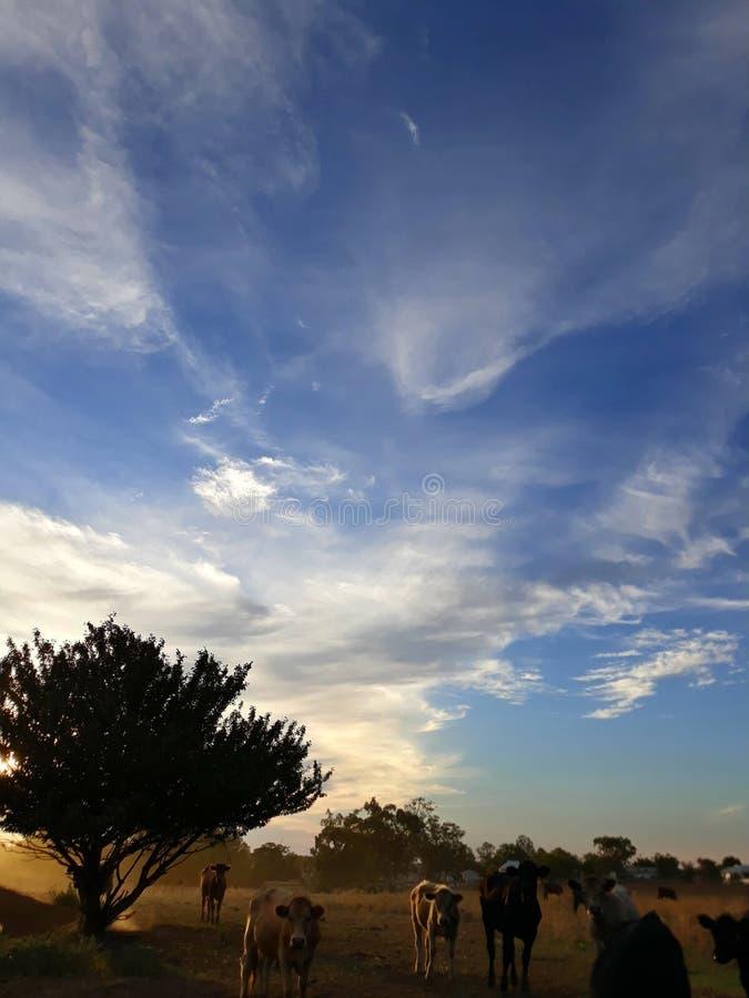 Ein australischer Sonnenuntergang auf einem Bauernhof stockbild