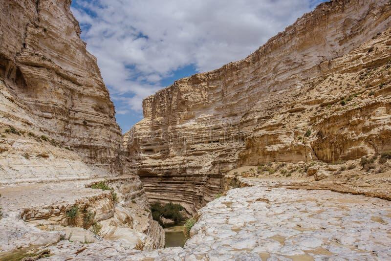 Ein Avdat -峡谷在Neqev沙漠 免版税库存照片