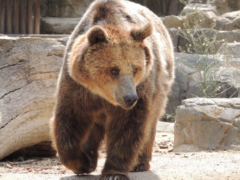 Ein Bär stockfotografie