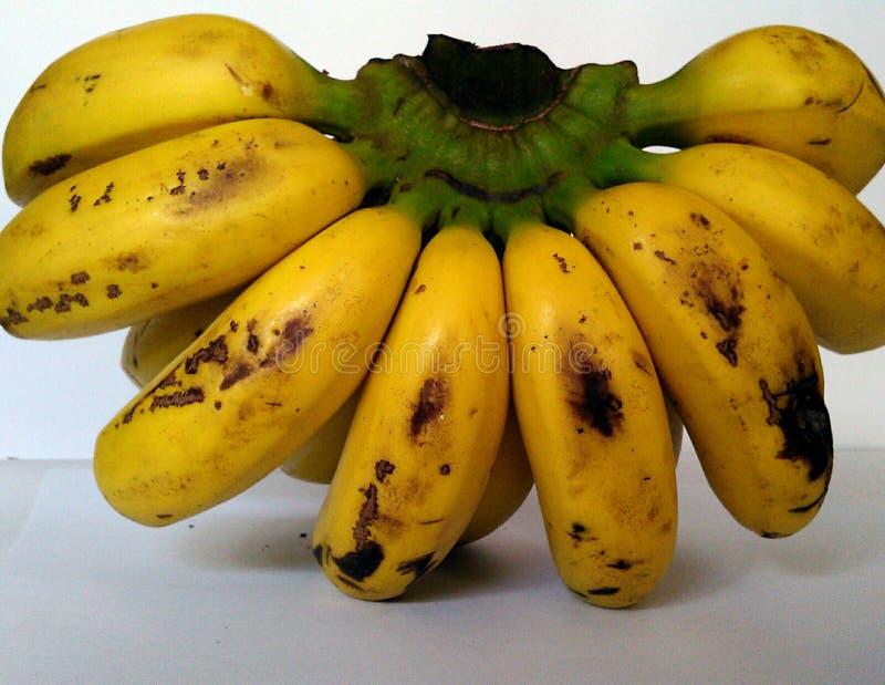 Ein Bündel Bananenfrucht lizenzfreies stockbild