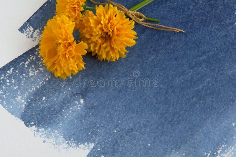 Ein Bündel gelbe Coreopsisblumen auf einem Blatt des Aquarellpapiers mit einem Indigo-farbigen Aquarellfleck lizenzfreie stockbilder