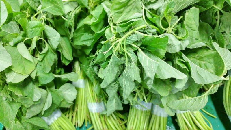 Ein Bündel grüner Spinat stockfotos