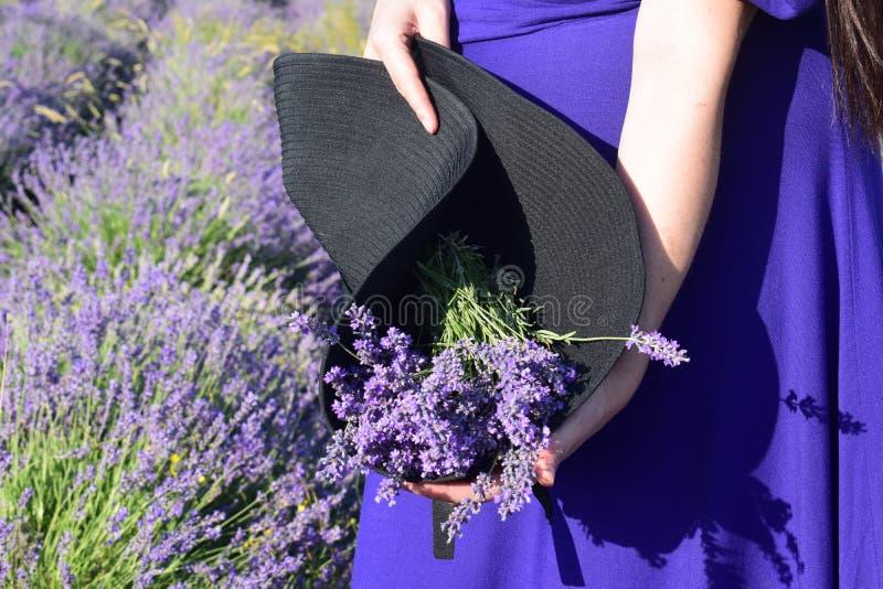 Ein Bündel Lavendel in einem schwarzen Hut gehalten in den Händen eines Mädchens vor dem hintergrund eines Lavendelfeldes Der Sch stockfotografie
