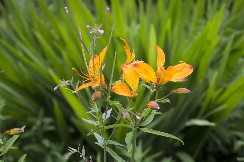 Ein Bündel schöne orange Blumen lizenzfreies stockbild