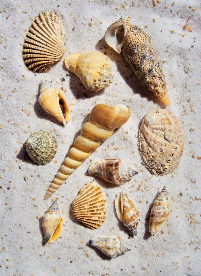Ein Bündel Seeshells im Sand lizenzfreie stockbilder